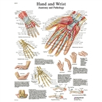 "Hand and Wrist STICKYchartâ""¢ VR1171S"
