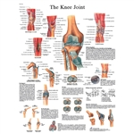 Knee Joint STICKYchart