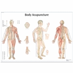 Body Acupuncture Chart - Thickly Laminated - VR1820L