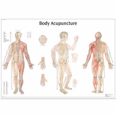 Body Acupuncture Chart - Thickly Laminated