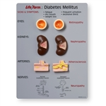 Life/form® Diabetes Mellitus Teaching Kit WA20495U