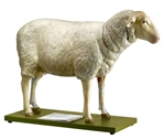 SOMSO Sheep Model | Sheep Model | Somso Model of a Sheep | SOMSO Sheep Model Zo 22 | Anatomical Model of a Sheep | Muscular System Model of a Sheep | Internal Organs Model of a Sheep | Buy SOMSO Sheep Model Zo 22 | SOMSO Sheep Model  On Sale
