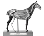 SOMSO Horse Model, 1/4 Natural Size - 3 Parts - Zo29