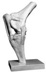 SOMSO Knee Joint of the Horse | Knee Joint of the Horse | Horse Knee Joint Model | SOMSO Horse Knee Joint Model Zo-41 | SOMSO ZO-41 Knee Joint of the Horse | Buy SOMSO ZO-41 Knee Joint of the Horse | SOMSO ZO-41 Knee Joint of the Horse On sale