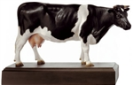 SOMSO Model of Fresian Dutch Cow - Zo71