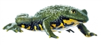 SOMSO Yellow-bellied Toad