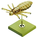 SOMSO Headlouse Model