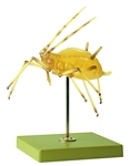 SOMSO Aphid Model