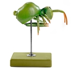 Springtail Model | SOMSO Springtail Model | Somso model of Springtail | SOMSO Springtail Model On Sale | SOMSO Springtail Model ZoS-49-3 | Somso Springschwanz Model