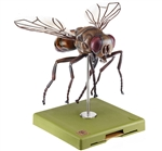 SOMSO Model of a Fly