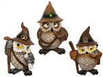 Wise Wizard Owl set