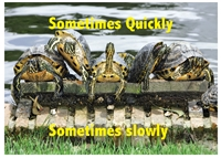 Sometimes Quickly Sometimes Slowly Greeting Card features turtles on a dock