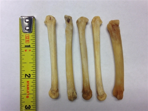 NEW AGE BOTANICA GENUINE COYOTE FOOT BONES SET OF 5 WITH FREE U S  SHIPPING!