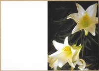 Large Sympathy Card Blank Lilies 1560014