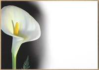 Large Sympathy Card White Calla Lily. 1560051