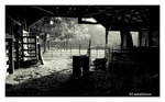 Fine Art Giclee Print - 'Inside the Barn'