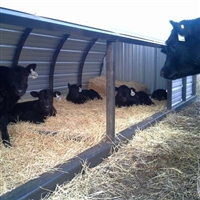 Calf Shelter Common Sense