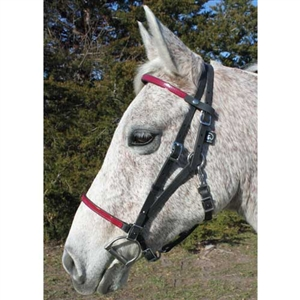 Best Discount Price on The Bitless Bridle by Dr  Cook