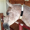 Glo Flex Safety Collar for Your Horse