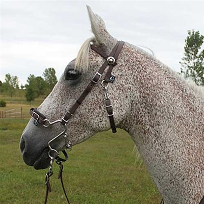 Best Discount Price On S Hackamore Bridle Combos
