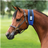 Superior Narrow Throat Sweat Giving your horse the help he needs to achieving the perfect throatlatch has never been easier. Designed from super stretchy, lightweight neoprene (3mm thick) to conform to the throatlatch area.