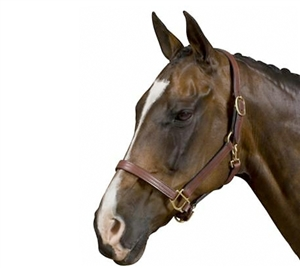 Collegiate Triple Stitched Breakaway Headcollar for sale!