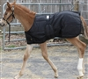 Expandable Foal Stable Blanket for Sale