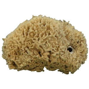 Natural Sea Sponge with Grommet For Sale!