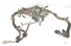 XJ6 Series 1 Panel Wiring Harness C30011