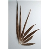"English Ringneck Pheasant Tails 06""-08"" (100 Pieces Per Order)"
