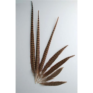"English Ringneck Pheasant Tails 16""-18"" (100 Pieces Per Order)"