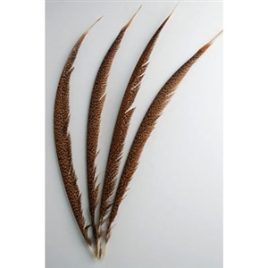 "Golden Pheasant Tails Center 20""-30"""