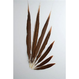 "Golden Pheasant Tails 20""-30"" Side"