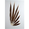 "Golden Pheasant Tails 04""-10"" Side"