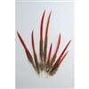 "Golden Pheasant Tails 4""-12"" Red Tip"