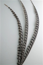 "Lady Amherst Pheasant Tail Centers 30""-40"""