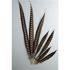 "Lady Amherst Pheasant Tails 04""-10"" Side"