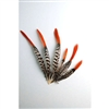 "Lady Amherst Pheasant Tails 4""-12"" Red Tip"