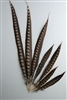 "Lady Amherst Pheasant Tails 40""-45"" Side"