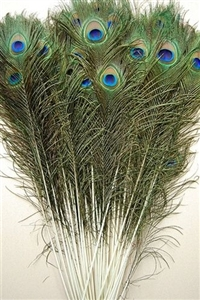 "Peacock Tails 50""-55"""