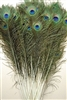 "Peacock Tails 55""-60"""