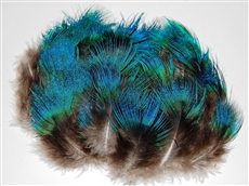Peacock Plumage - Blue Hairy
