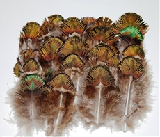 Peacock Plumage - Green/Gold