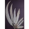"Silver Pheasant Tails 16""-20"""