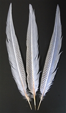 "Silver Pheasant Tails 20""-30"" DYED WHITE"