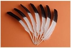Turkey Quills - Tipped