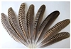Peacock Quills - Natural