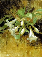 """Datura"", Botanical Giclee by Sherry Loehr"