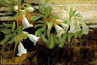 """Datura, Large"", Botanical Giclee by Sherry Loehr"