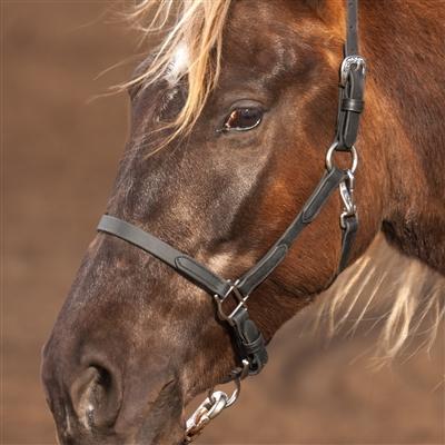 BioThane Halter in leather-like Black Beta. Horse Shoe Embossed Western Buckles.   All hardware is Stainless Steel.